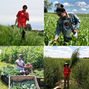 Four people working with agriculture
