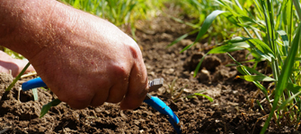 A person pointing at the corn soil