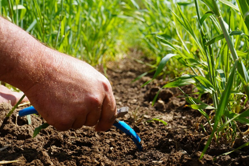 A person pointing a soil between cover crops