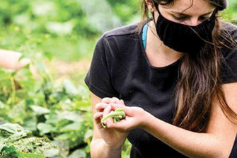 A woman harvesting organic crops